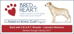 AKC Bred with H.E.A.R.T. Program