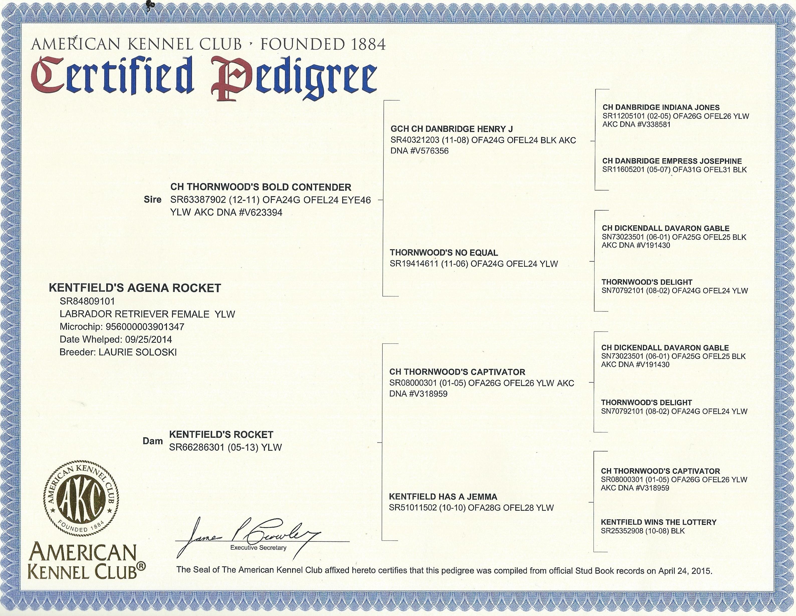 Agena AKC pedigree
