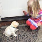 Jade puppy dob 3-7-16  teal collar  Karin McLean