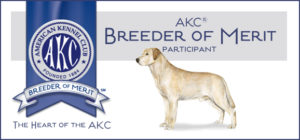 Labrador Retriever Breeder of Merit
