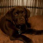 Tony S. PTSD Service dog