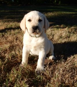 Started Y/M pup available