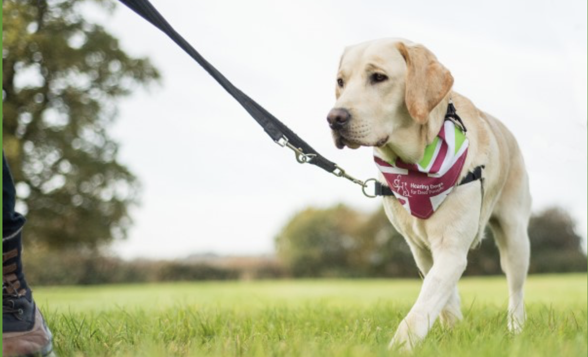 dog-walk-sheffield-park