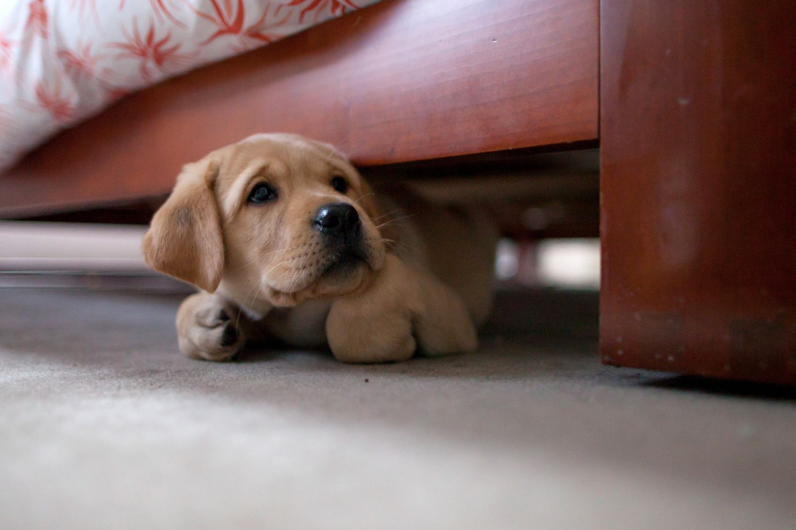 scared-puppy-GettyImages-164154580-577182243df78cb62c967b53
