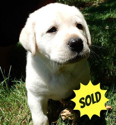 sold puppy 22222