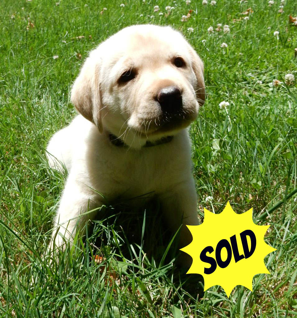 started puppy 3 sold